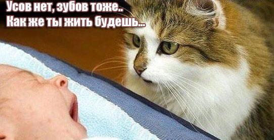 http://www.photoknopa.ru/uploads/kartinki/31/9.jpg