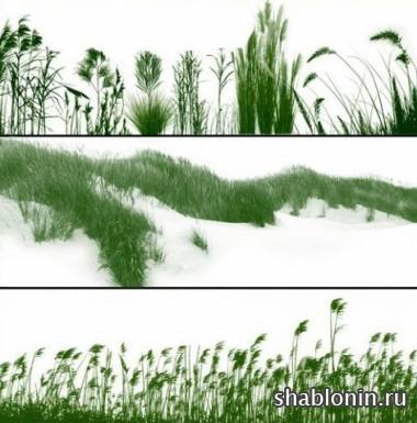 ����� ����� / Grasslands brushes