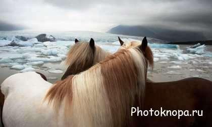 Клипарт пародистые лошади на природе