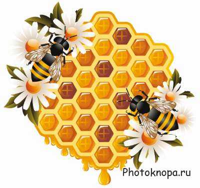 фото пчелы улей