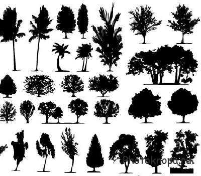 И хвойных деревьев в векторе