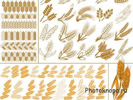 Хлебные колоски картинки