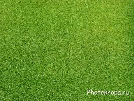 Фоны и текстуры для фотошопа - зелёная трава скачать бесплатно