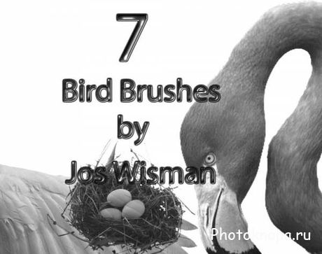 Кисти для Photoshop птицы - Bird Brushes