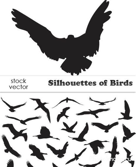 ������� ���� ��������� ������� - Silhouettes of Birds