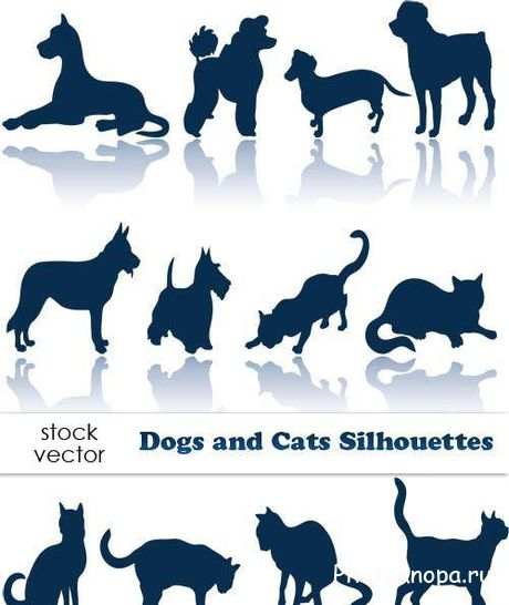 ����� � ������ Dogs and Cats - ��������� �������