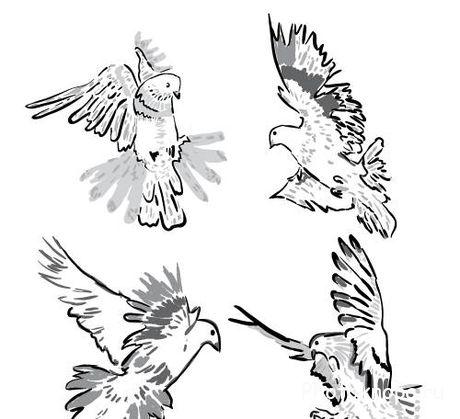 нарисованные картинки голубь