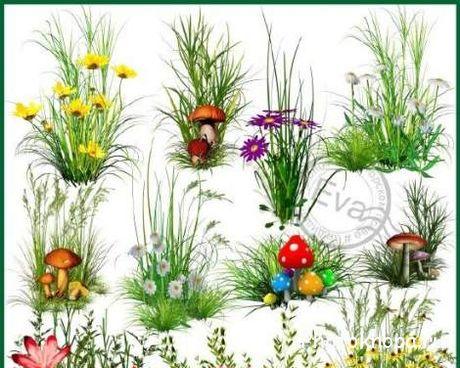 Цветы на прозрачном фоне psd клипарт