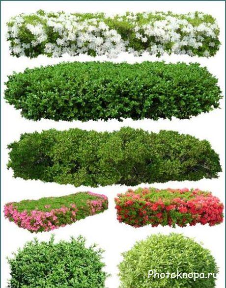 Куст Зеленой Травы, Зеленая Трава, Зеленое Растение - Straw Plant ...   587x460