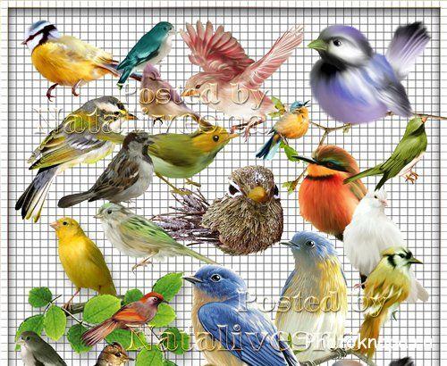 Картинки сказочная сова