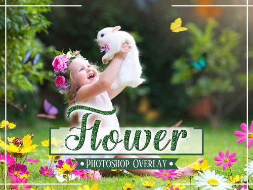 Flower Photo Overlays