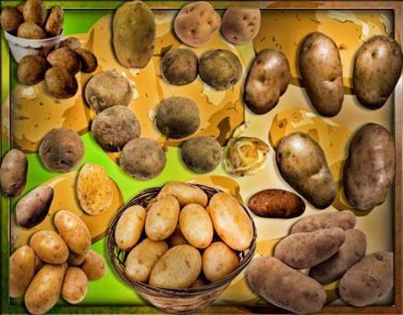 Клипарты для фотошопа - Картошка