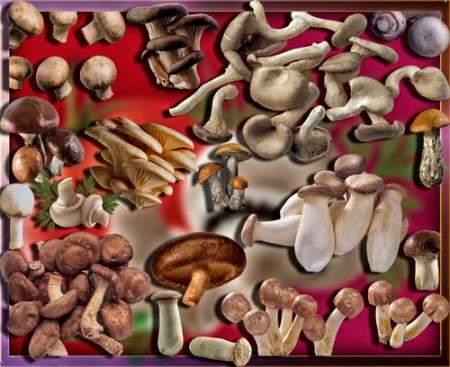 Прозрачные клипарты для фотошопа - Осенние грибы