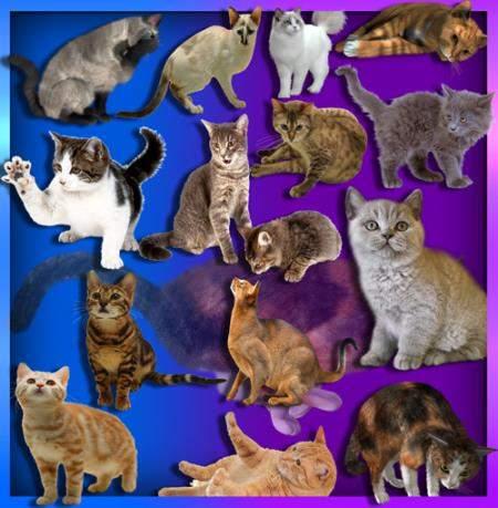 Png клипарты - Коты и кошки