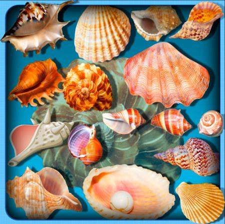 Png клипарты - Ракушки моря