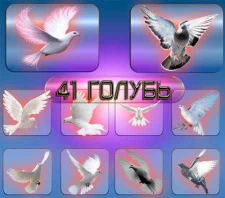 Прозрачные клипарты для фотошопа - Голуби и голубки