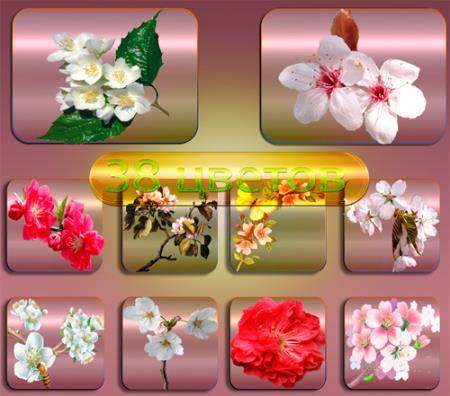 Png клипарты - Светущий сад